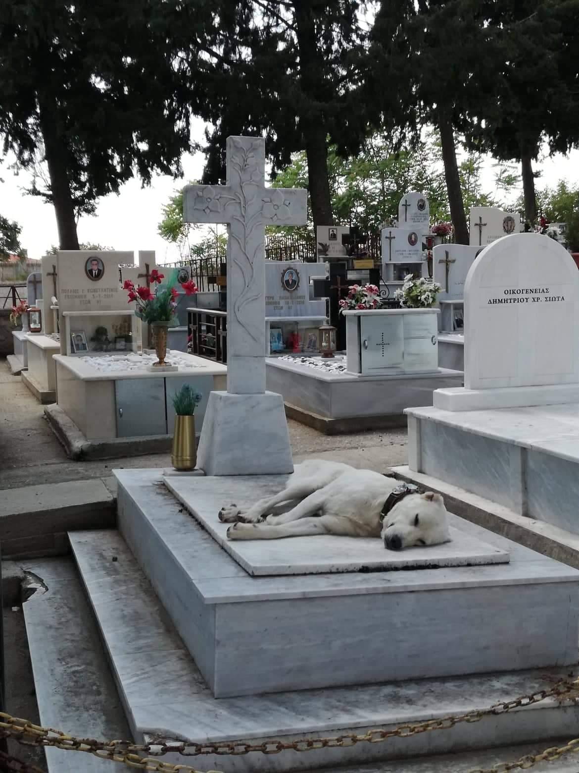 Σιάτιστα: Καταγγελία για απροστάτευτα νεκροταφεία